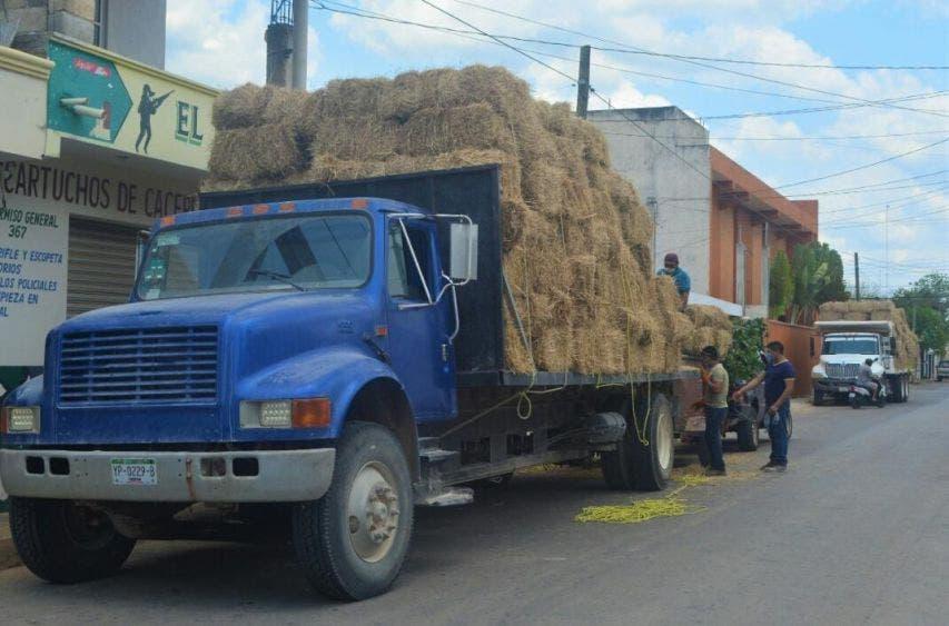 Empresario brinda ayuda a ganaderos de José María Morelos; reduce en 50% el costo de las pacas de pastura para alimentar a las reses.