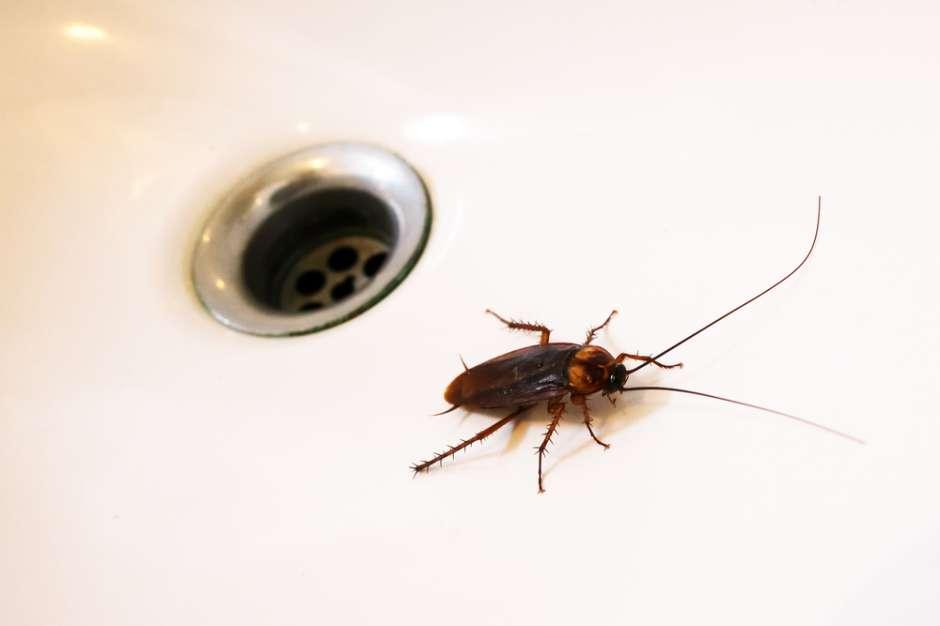 Acaba con la asquerosa plaga de cucarachas en tu hogar