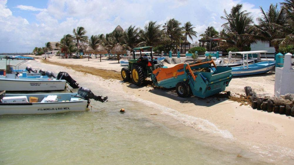 Activa Laura Fernández acciones para mantener playas libres de sargazo