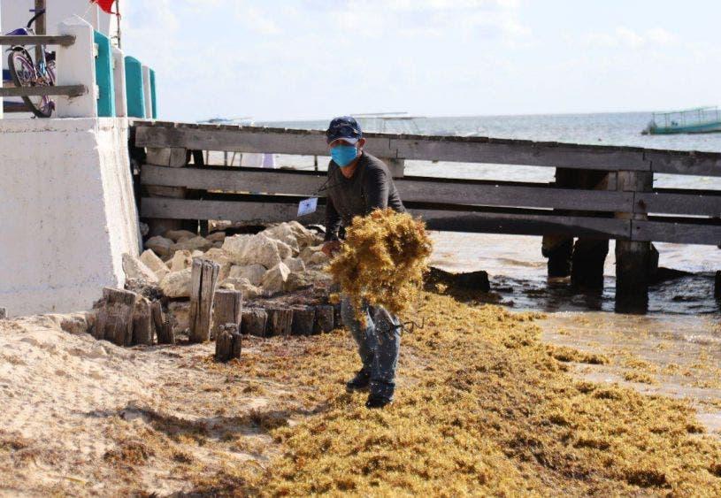 Atiende Laura Fernández arribo de sargazo a Puerto Morelos, con una cuadrilla de trabajadores que todos los días retiran la macroalga
