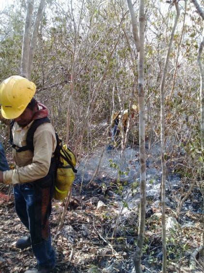 Sofocan al 100% el incendio de Xlapak que afectó a Yalahau; hubo una afectación de más de mil 200 hectáreas.