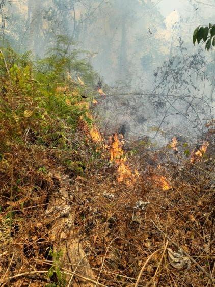 Supera Q Roo número de hectáreas afectadas por incendios forestales; hasta el momento se ha dañado mil 715 has más que en el 2019.