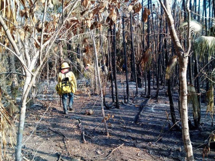 Afectan incendios forestales 26 mil has en Quintana Roo.
