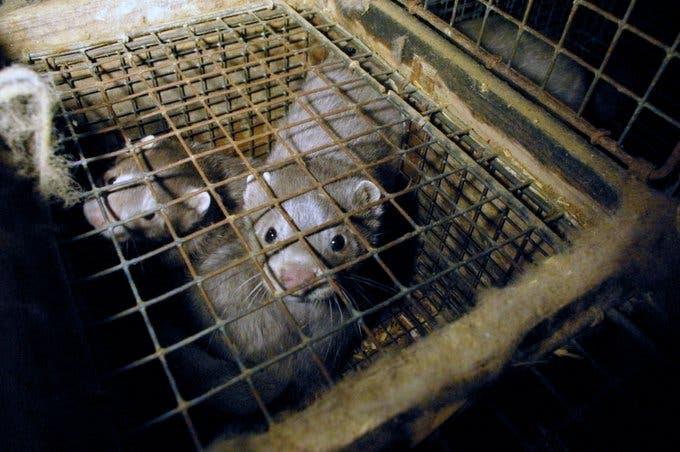 Wuhan prohíbe consumo de animales salvajes