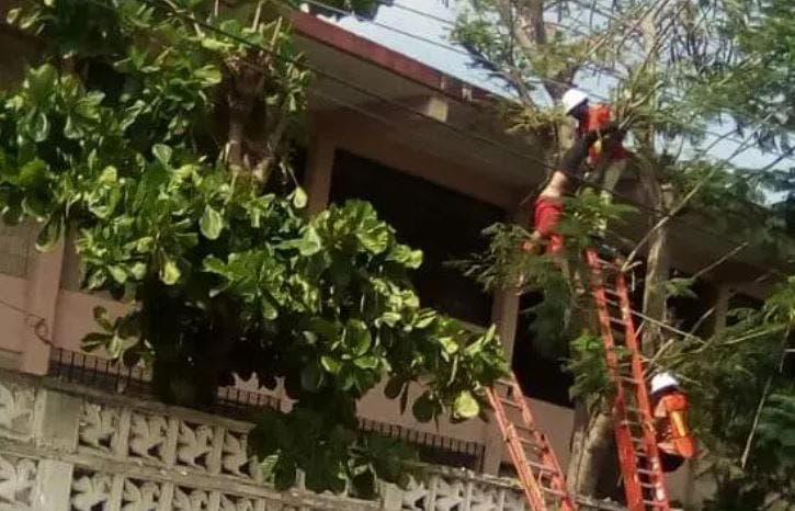 Mérida: Joven trabajador de la CFE recibe descarga eléctrica cuando podaba un árbol