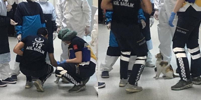 Gatita lleva a su cría al hospital para que lo atiendan