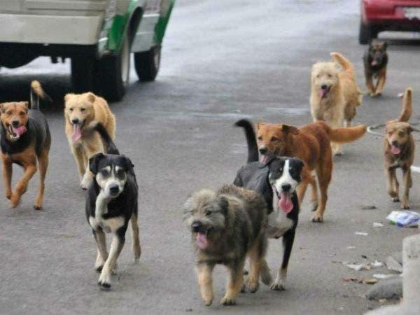 Surgen casos de envenenamiento a perros y gatos en Umán