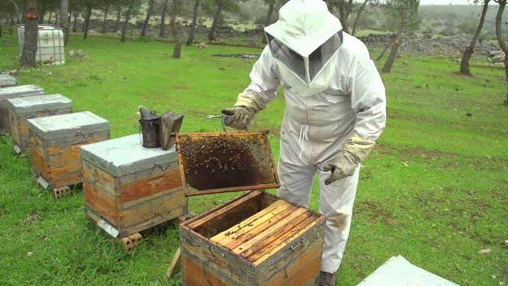Urgen apicultores apoyo tras paso de tormenta