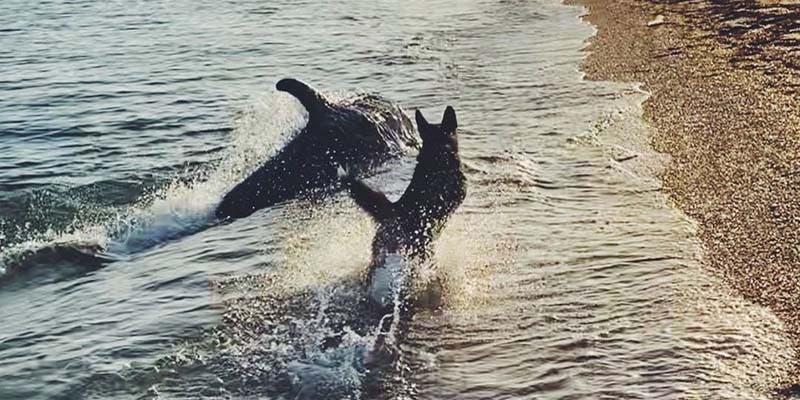 Video: Perro y delfín hacen amistad en la orilla de la playa