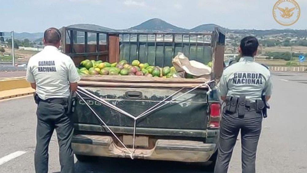 Decomisan 100 kilos de marihuana oculta en cargamento de mangos