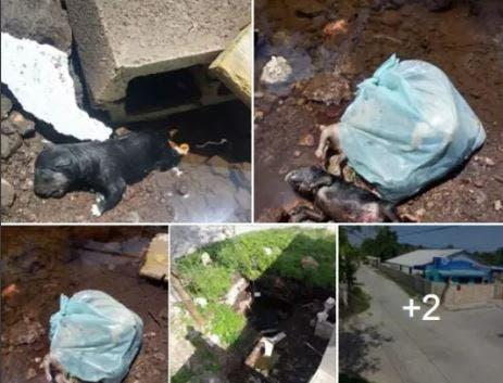 Abandonan a cachorros dentro de una bolsa en Motul, fallecen ahogados