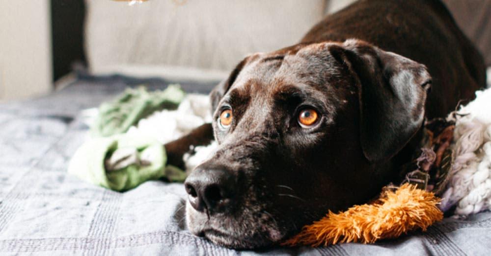6 acciones que ponen ansioso a tu perro