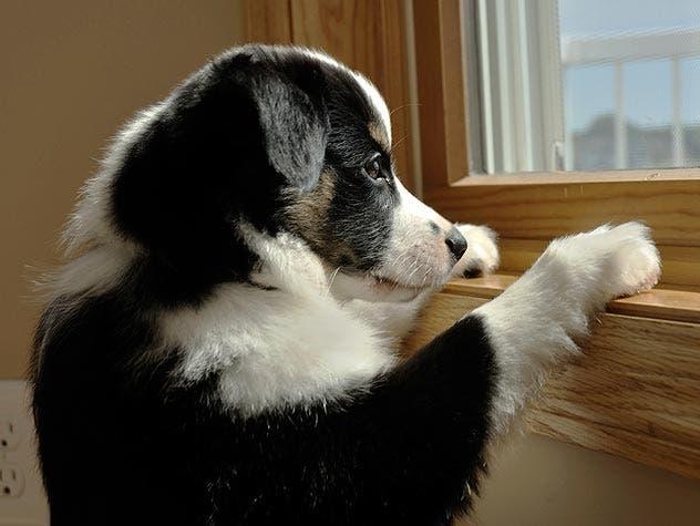 6 acciones que ponen ansioso a tu perro.