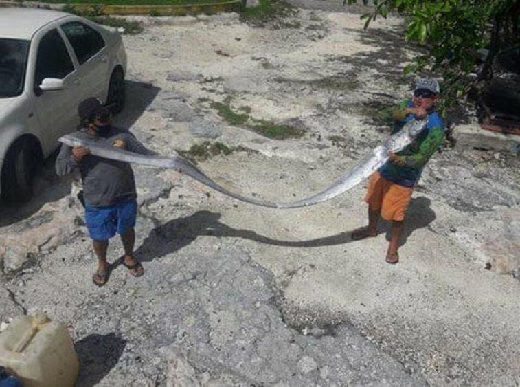 Presagio del pez remo capturado en Cozumel, trajo un sismo