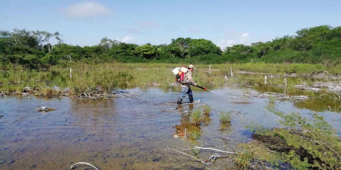 En Lázaro Cárdenas intensifican acciones contra el dengue.