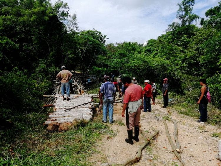 Inundaciones y plagas amenazan los cultivos en comunidades mayas; podrían verse afectadas más de 40 has en Laguna K'ana.