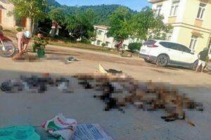 Detienen a pareja que mataba perros y gatos para vender su carne