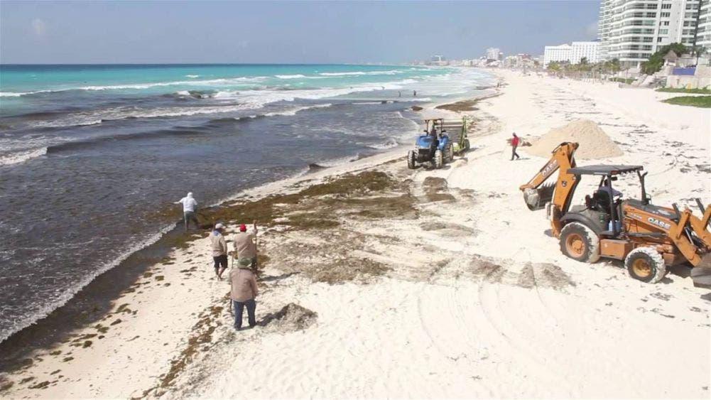 Retiran la mayor cantidad de sargazo en 4 playas certificadas de Cancún.