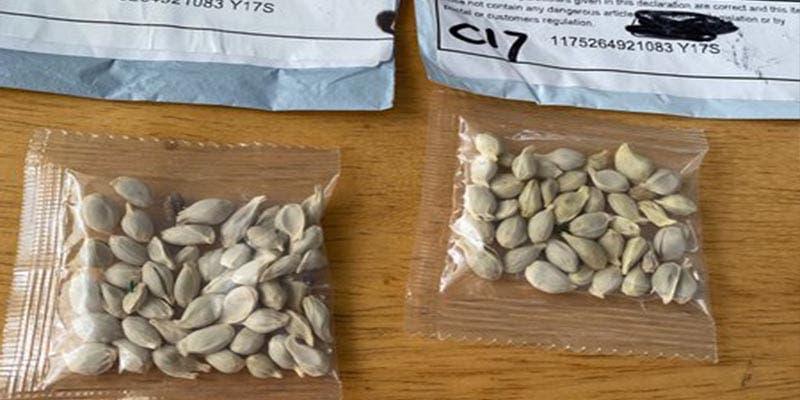 """Paquetes con """"semillas chinas"""" causan temor en EU"""