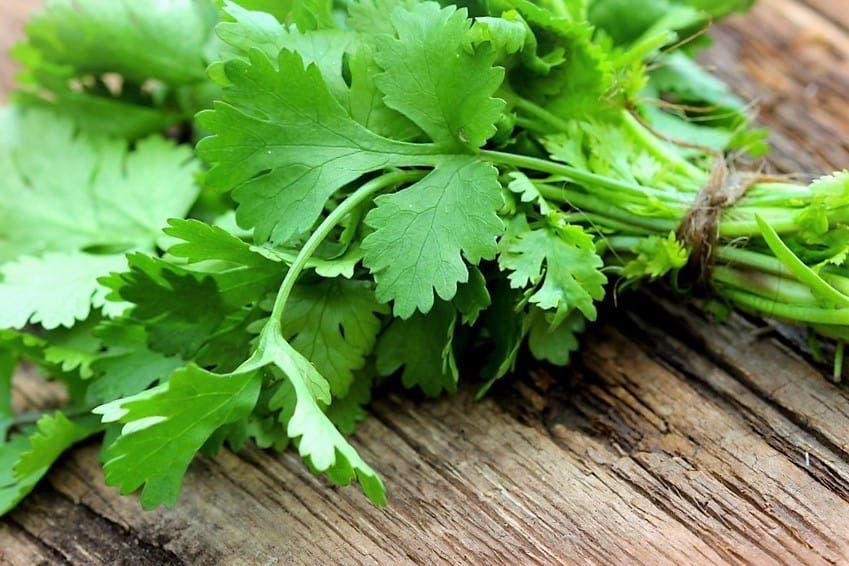 Beneficios de consumir cilantro… ¡La planta maravilla!