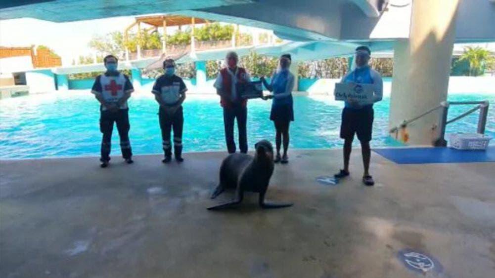 Entrega Grupo Delphinus donativo a Cruz Roja de Cancún