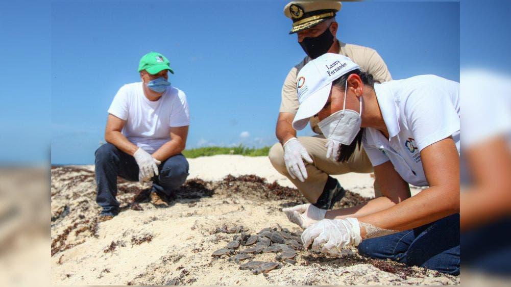 Encabeza Laura Fernández liberación de Crías de tortugas marinas