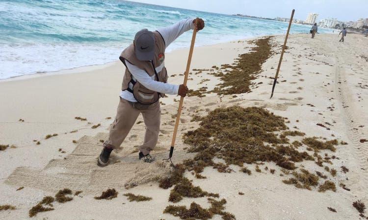 Incrementan los recales de sargazo en playas de Cancún.