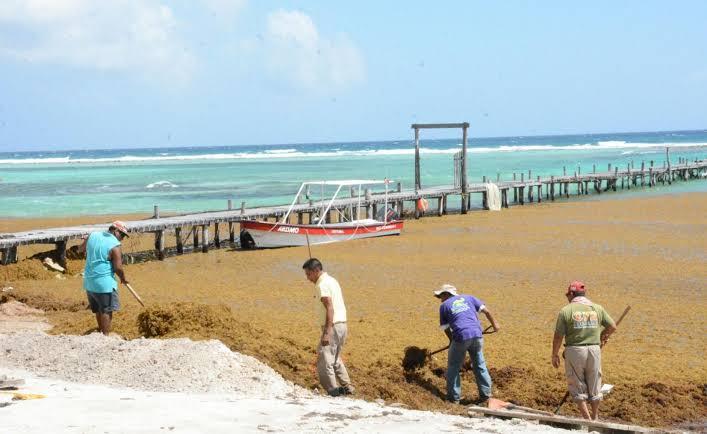 Redoblan esfuerzos para contener arribo de sargazo en Costa Maya.