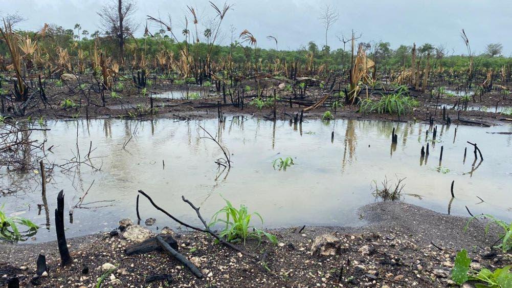 Campesinos piden ayuda ante pérdida de su producción