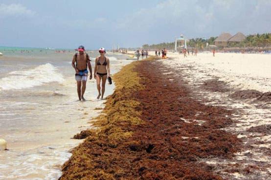 Vincularan sus actividades con autoridades federales para fortalecer las acciones del Comité Técnico en Quintana Roo.