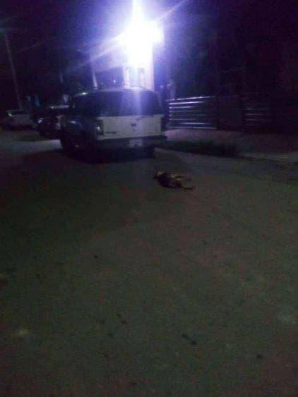 En Chetumal arrastran perro con una camioneta hasta matarlo; la atrocidad causó indignación e impotencia en las redes sociales.