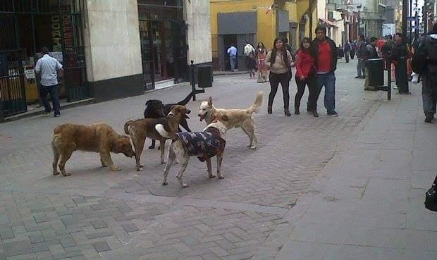 Reclaman a directora de Salud Municipal de quedarse con 10 mil pesos para perros y gatos