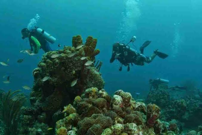 Restringen actividad turística en chinchorro para proteger los corales