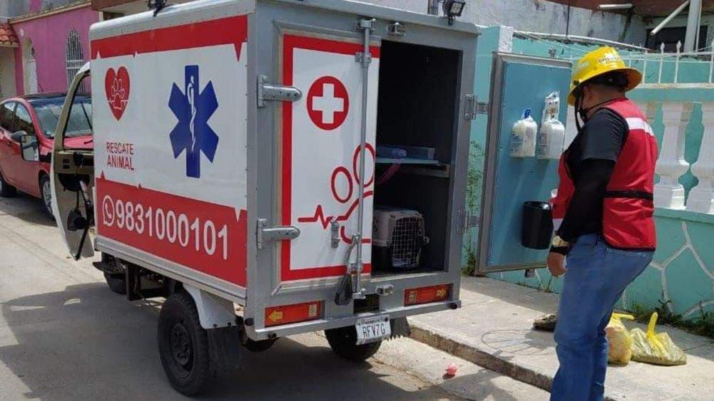 Tiene Chetumal ambulancia para mascotas única en México