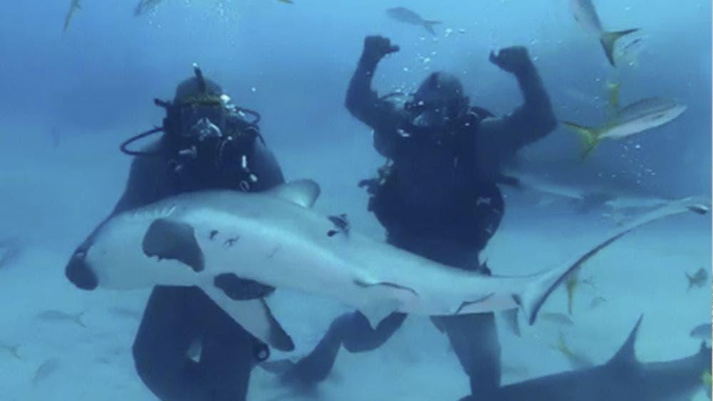 Video: Tyson el amo, domina hasta a un tiburón