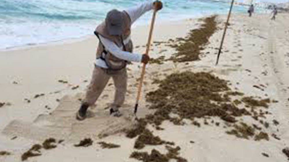 Realiza ayuntamiento jornada de limpieza de playas