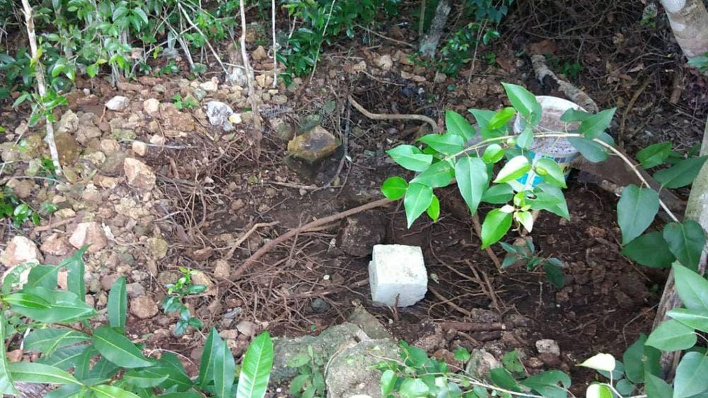 Cozumel: Padrastro pone a hijastro a cavar su propia tumba