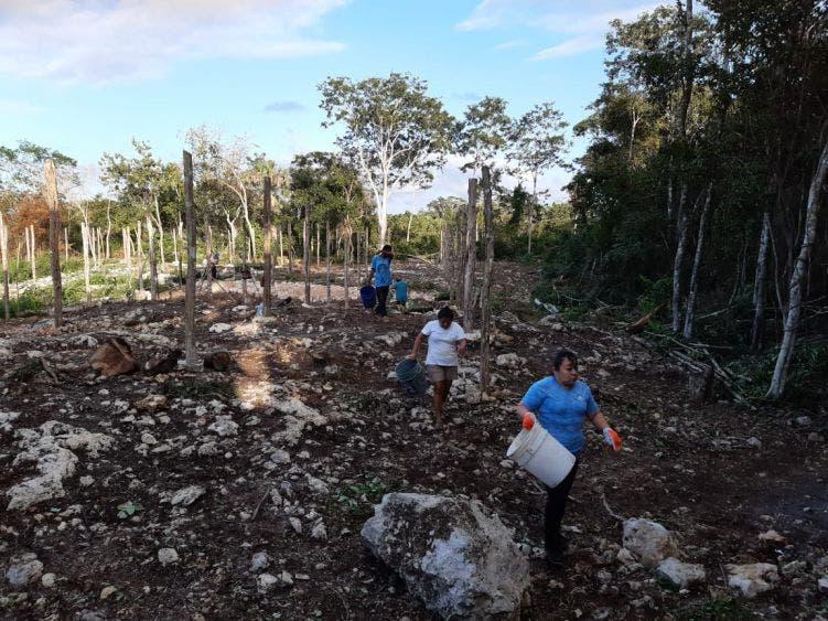 Sembrando Vidas beneficia a 140 ejidatarios de Nuevo X-Can; programa federal brinda una mejor calidad de vida a los campesinos.