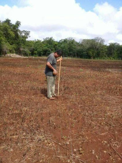 Campesinos mayas continúan compartiendo experiencias sobre la milpa.