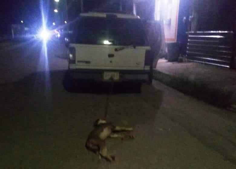 En Chetumal arrastran perro con una camioneta hasta matarlo.