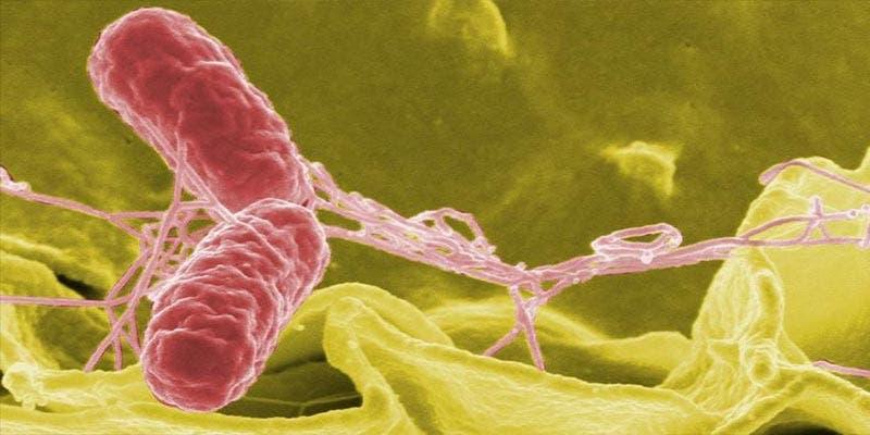 Surge brote de salmonela en Estados Unidos