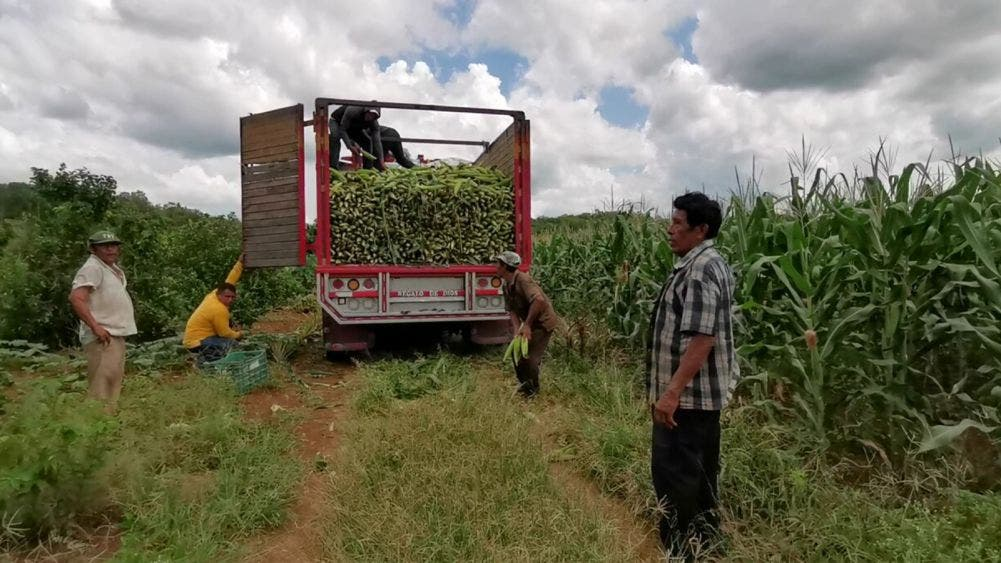 Claman campesinos de JMM por empleos temporales