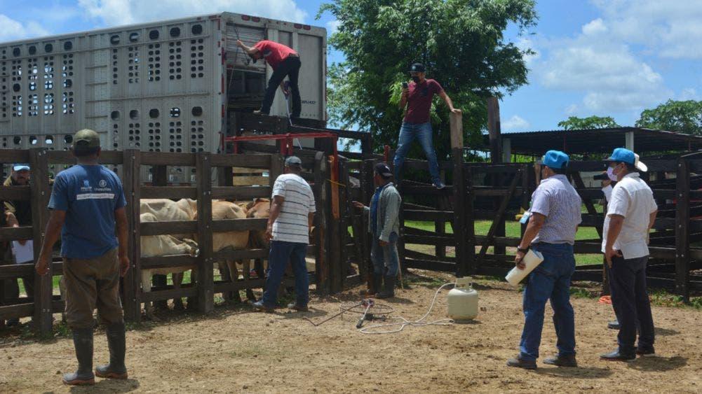 Abandona Gobierno Federal a Ganaderos de Quintana Roo