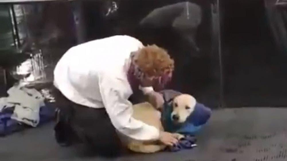 ¡Enternecedor! Se quita el abrigo y cobija a un perrito