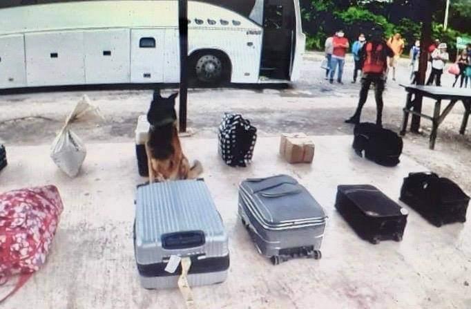 Aseguran militares droga en camión con destino a Cancún.