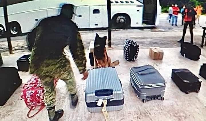 """Aseguran militares droga en camión con destino a Cancún; 10 kilos de mariguana eran transportados en una maleta """"sin dueño""""."""