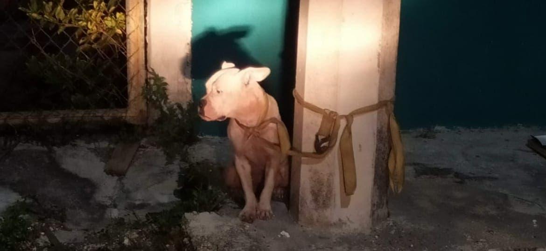 Regresa con su dueño perro que cuidaba narcotienda.