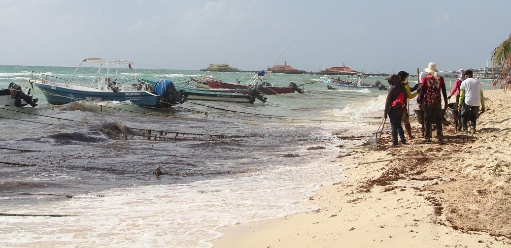 Estiman que termine pronto en recale de sargazo en Playa del Carmen.