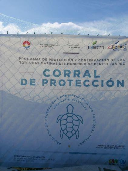 · Suman 6 nidos de tortuga Laúd resguardados.