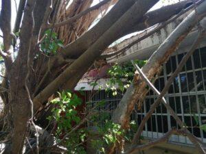 Se requieren 6 mdp para reparar escuelas dañadas por Delta: IFEQROO